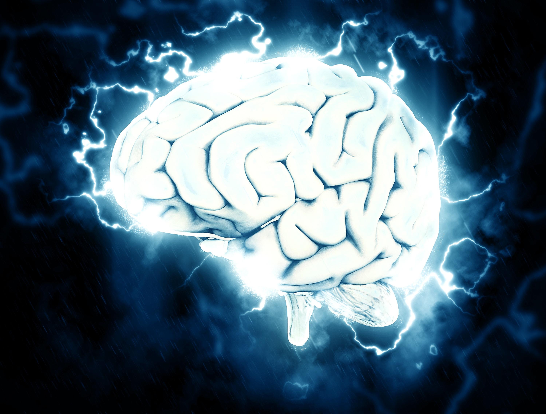 brain-1845962